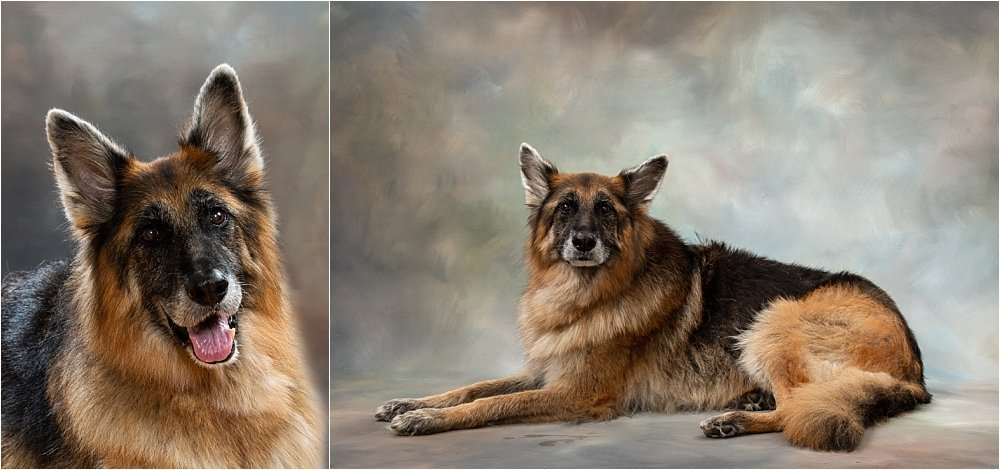 Photographing Man's Best Friend
